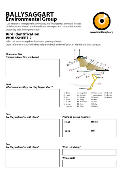 Birds Beaks And Claws Lesson Plans Worksheets Reviewed By Teachers