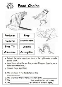 Food Chains Labels Worksheet
