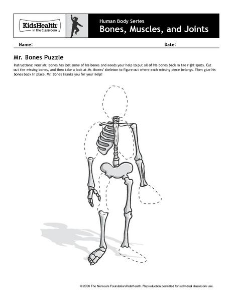 Human Body Series - Bones, Muscles, and Joints - Mr. Bones ...