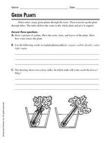 Green Plants: Photosynthesis Worksheet