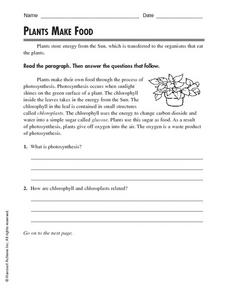 Plants Make Food Worksheet