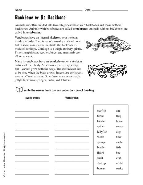 vertebrates and invertebrates backbone or no backbone worksheet for 4th 5th grade lesson planet. Black Bedroom Furniture Sets. Home Design Ideas