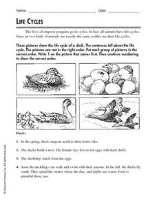 Life Cycle: Duck Worksheet