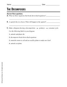 The Decomposers Worksheet