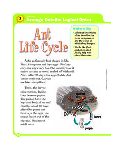 Logical Order: Ant Life Cycle Worksheet
