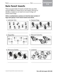 Rain Forest Insects - Enrichment 9.3 Worksheet