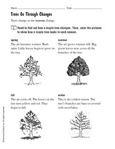 Trees Go Through Changes Worksheet