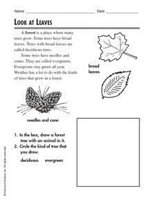 Look At Leaves Worksheet