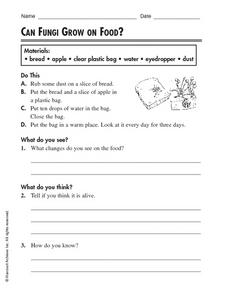 Can Fungi Grow on Food? Worksheet