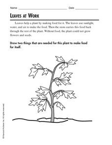 Leaves at Work Worksheet