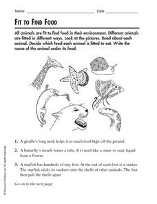 Science Activity: Environment: Fit To Find Food Worksheet