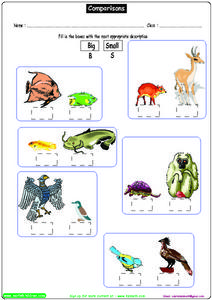 Comparisons - Large and Small Objects Worksheet