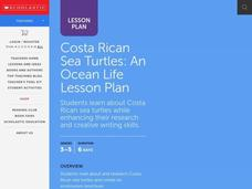 Costa Rican Sea Turtles Lesson Plan