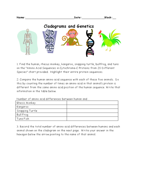Cladograms and Genetics 10th - Higher Ed Worksheet | Lesson Planet