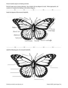 monarch butterfly diagram and labeling worksheet worksheet