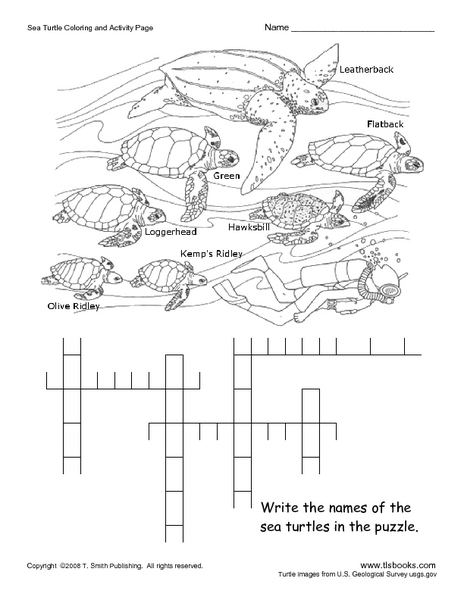 Sea Turtle Coloring and Activity Page Worksheet for 5th