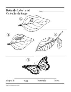 Butterfly: Label and Color Each Stage Worksheet