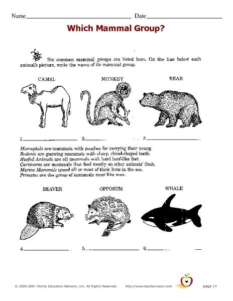 Mammals 3rd Grade All Worksheets » ...