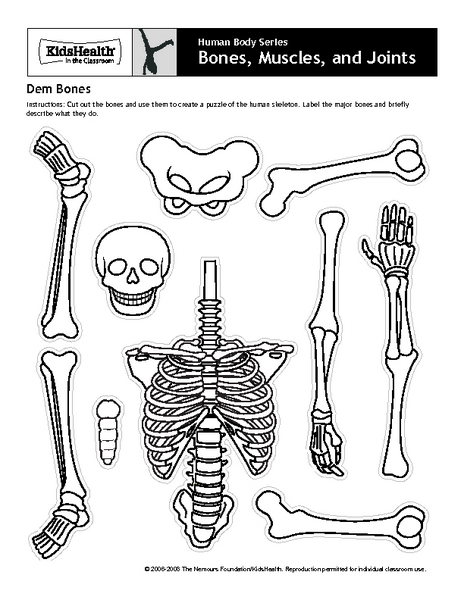 picture regarding Printable Human Skeleton named Human Overall body Collection - Bones, Muscular tissues, and Joints - Dem Bones