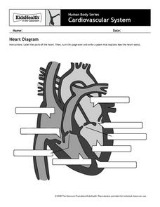 Human Body Series - Cardiovascular System - Heart Diagram Worksheet