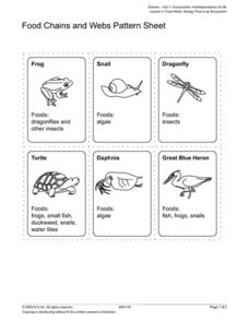 Food Chains and Webs Pattern Sheet Worksheet