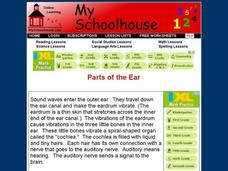 Parts of the Ear Interactive
