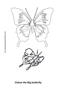 Color the Big Butterfly Worksheet