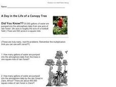 A Day in the Life of a Canopy Tree Worksheet