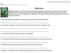 Adjectives: Rainforest Worksheet