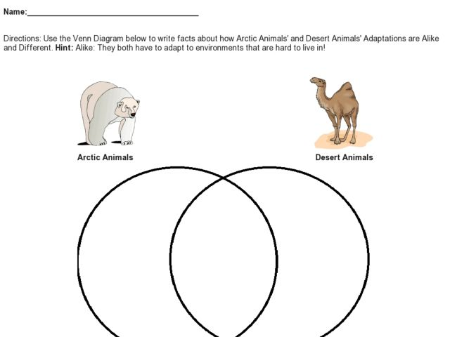 Venn Diagram Comparing Artic Animals And Desert Animal Adaptations Graphic Organizer For 3rd