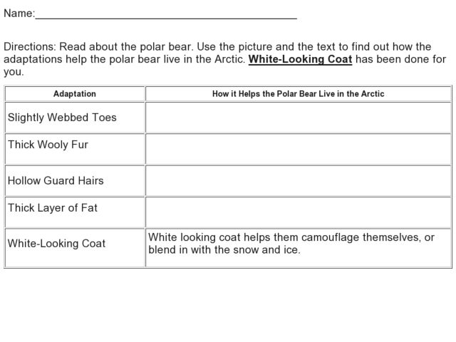 Arctic Adaptations 3rd 4th Grade Worksheet – Adaptation Worksheet