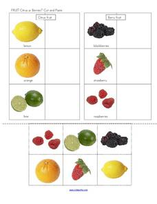 Fruit: Citrus or Berries? Worksheet
