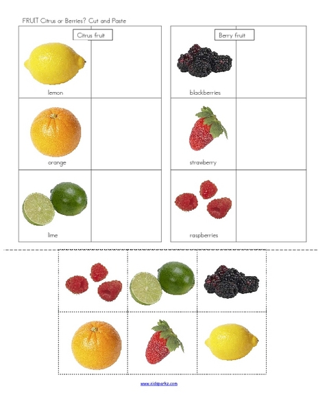 Fruit: Citrus or Berries? Graphic Organizer for 1st - 2nd