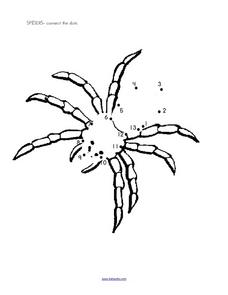 Spider Connect the Dots Worksheet