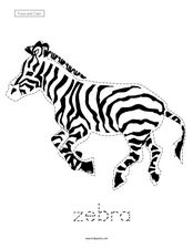 Trace and Color: Zebra Worksheet