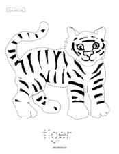 Trace and Color: Tiger Worksheet