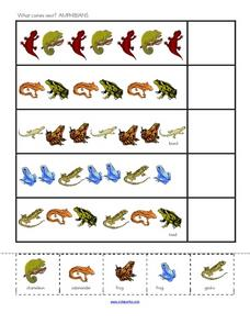 What Comes Next? Amphibians Worksheet