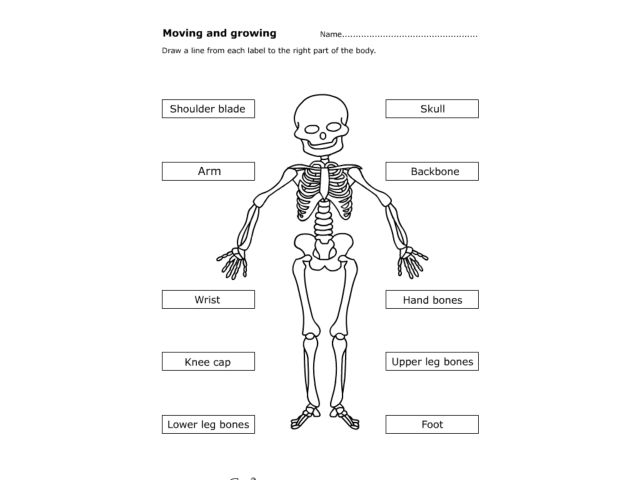 Worksheets Human Skeleton Worksheet Grade4 moving and growing the human body 4th 5th grade worksheet lesson planet