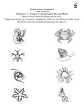 Temporary Zooplankton Mix and Match Worksheet