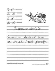 Cursive Writing Practice Lesson Plan