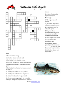Salmon Life Cycle Crossword Puzzle Worksheet