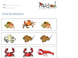 Odd Picture: Sea Animals Worksheet