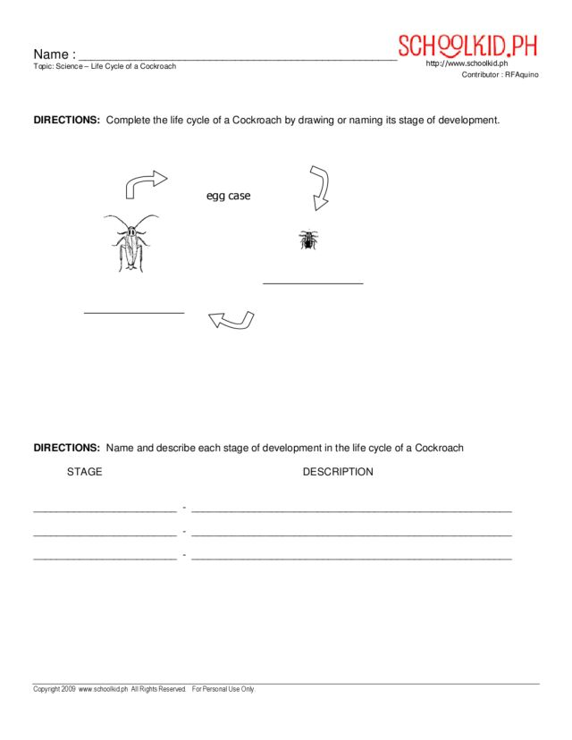 Life Cycle of a Cockroach Worksheet for 2nd - 4th Grade | Lesson Planet