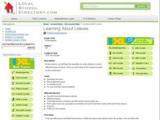 Learning About Leaves Lesson Plan