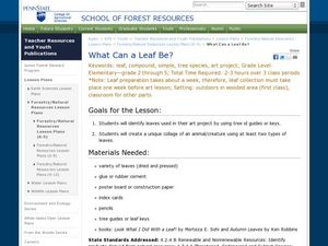 What Can a Leaf Be? Lesson Plan