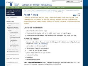 Adopt A Twig Lesson Plan