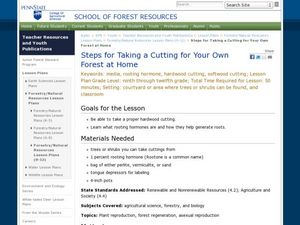 Steps for Taking a Cutting for Your Own Forest at Home Lesson Plan