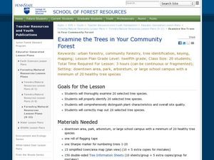 Examine the Trees in Your Community Forest Lesson Plan