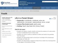 Life in a Forest Stream Lesson Plan