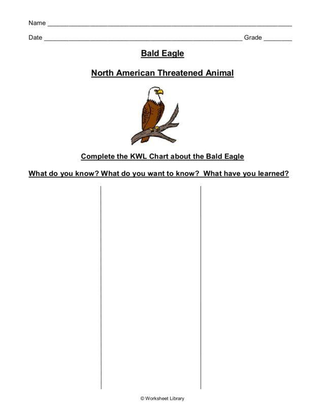 Bald Eagles: Quiz & Worksheet for Kids | Study.com